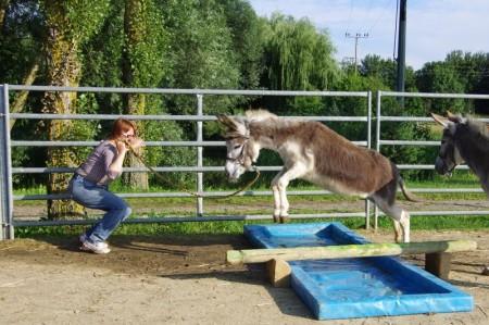 Josy - Hindernis als Chance - Führungstraining mit Eseln