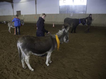 Weiterbildung, Führungstraining mit Eseln, Parcours